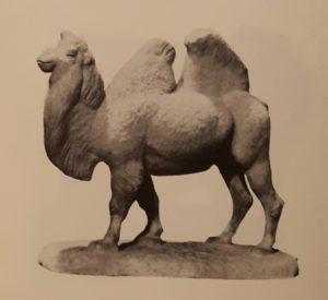 Верблюд. 1950-ые