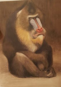 Мандрил сидя. Зоопарк Берлина. 1907-1908. Акварель