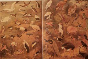 Ватагин. Иллюстрацию к статье «Птицы» в Малой Советской энциклопедии 1947